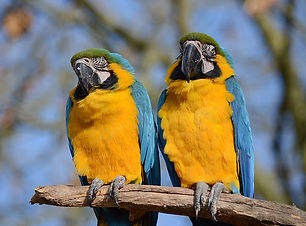 tropical birdland.jpg