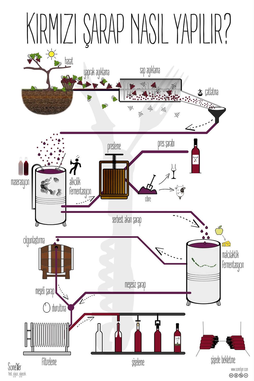 kırmızı şarap yapımı red winemaking sommelier somelyer