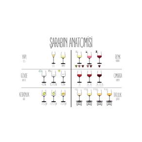 Şarabın Anatomisi
