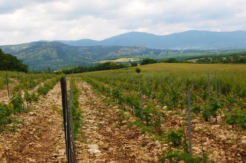 Yaklaşık 400 metre rakım. Pinot Noir, Chardonnay, Kalecik Karası ve Narince. Pinot Noir, Kalecik Karası ve Chardonnay toprağı 65 milyon yaşında bol fosilli kireç taşı ve smektit kil. Narince bağı toprağı kum ve parçalanmış granit, 350 milyon yaşında.