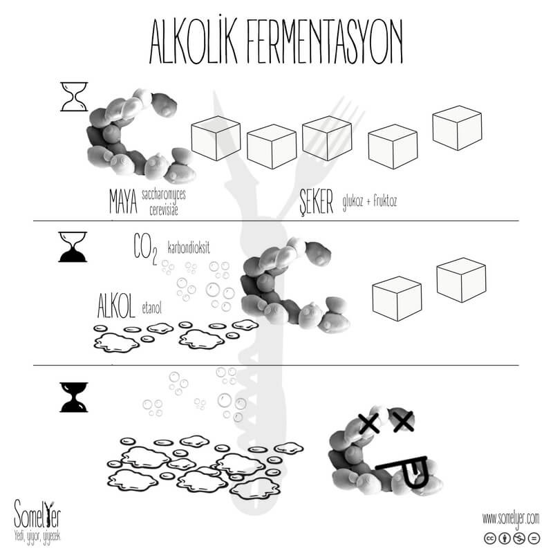 alkolik fermentasyon şarap alcoholic fermentation wine sommelier somelyer
