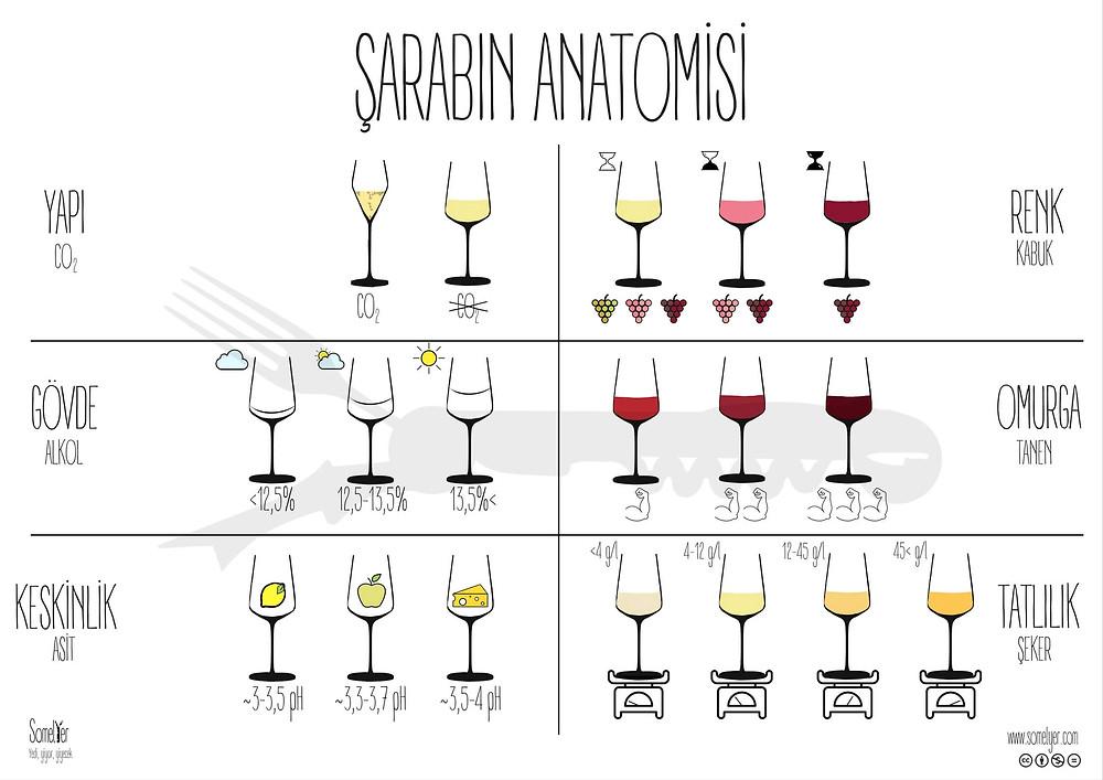 şarap anatomi wine somelyer