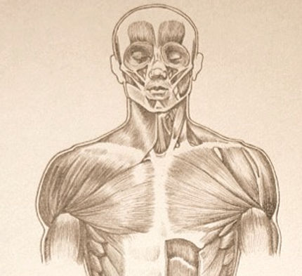 Muscles-in-Human-Body-31-2-by-Drawing-Academy_edited_edited_edited.jpg