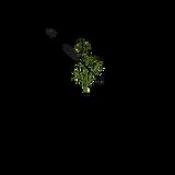 Centerpoint Wellness Logo-trans.png