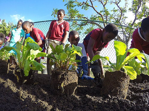 Educational School Garden (Donation)