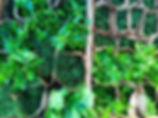 Green-garden-1.jpg