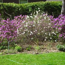 Cederberg garden photos