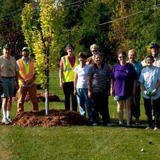 Tree Project Mulching Crew