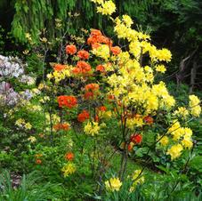 cederberg gardens