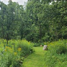 Cowling Arboretum at Carleton College, August Tour