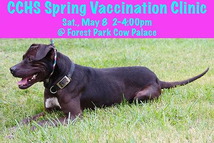 CCHS 2021 Spring Vacc Clinic.jpeg