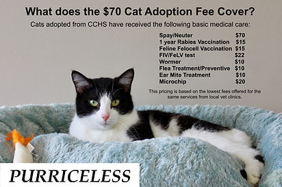 CCHS Cat Adoption Fee.jpeg
