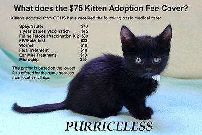 CCHS Kitten Adoption Fee.jpeg