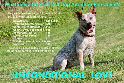 CCHS Dog Adoption Fee.jpeg