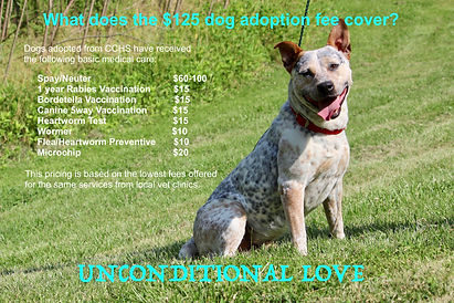 CCHS Dog Cost Infographic.jpeg
