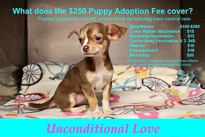 CCHS Puppy Adoption Fee.jpeg