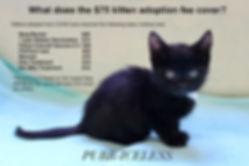 CCHS Kitten Fee info.jpg