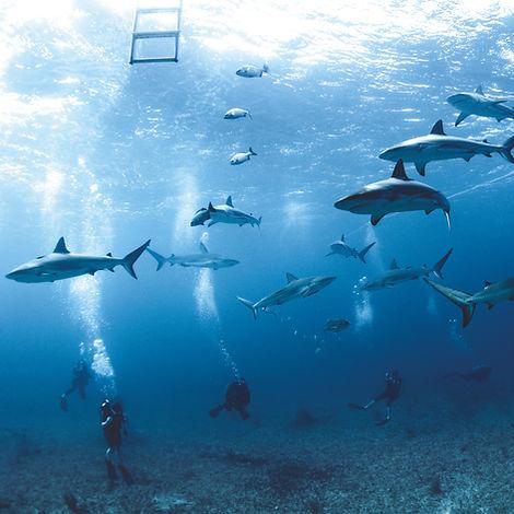 Shark Week Post.jpg