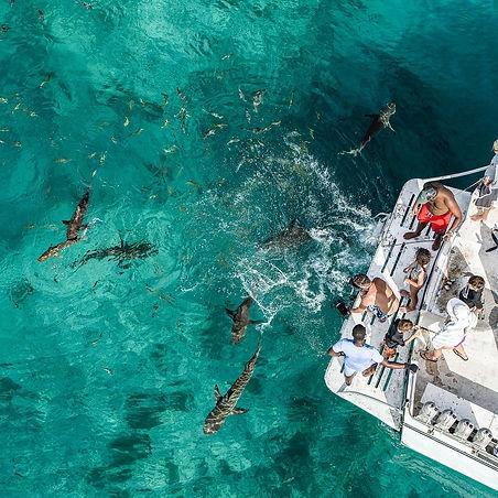 Reef Sharks Bimini