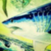Shark Diving Bimini