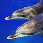 NWBSC-Wild-Dolphin-Safari.JPG