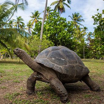 Seychelles 1.jpg