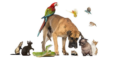 Blessing-of-the-Pets-660x330.jpg
