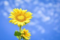 flowers-3598500_1920.jpg