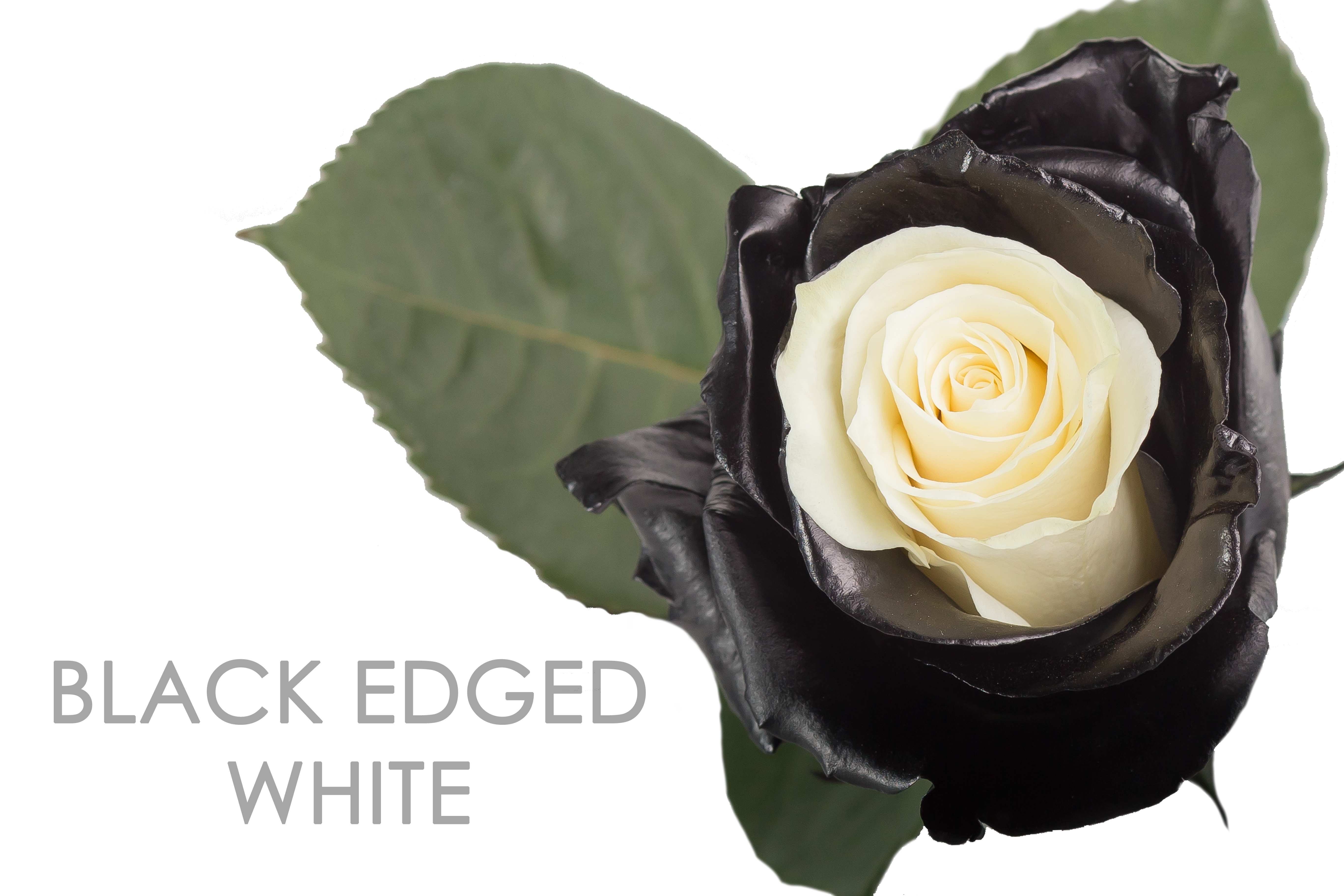 BLACK-EDGED-WHITE-CAPTION-UNIDAD
