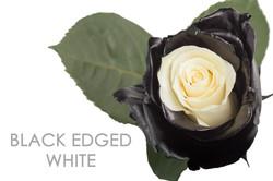 BLACK-EDGED-WHITE-CAPTION-UNIDAD