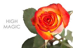 HIGH-MAGIC-CAPTION-UNIDAD
