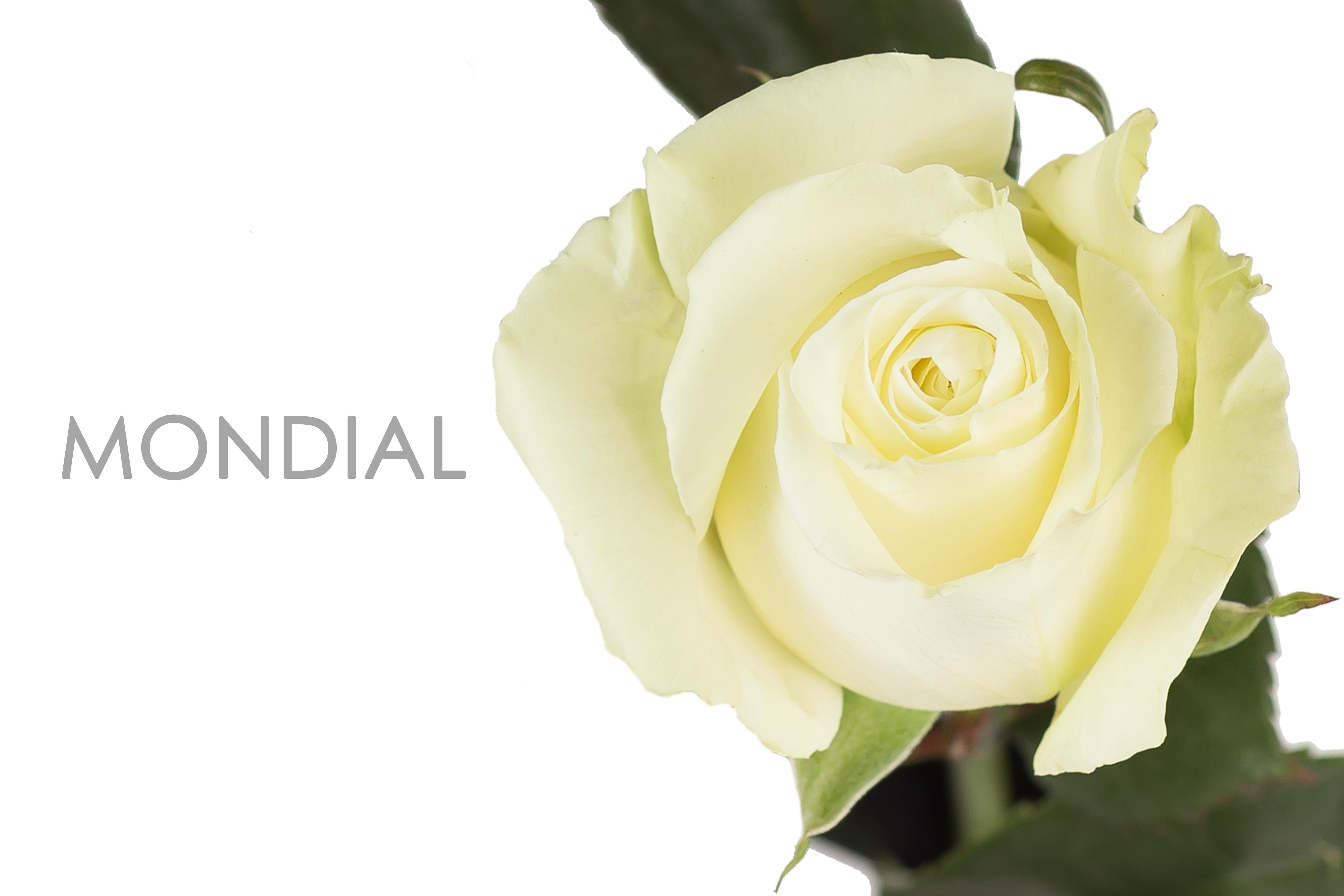 MONDIAL-CAPTION-UNIDAD