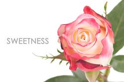 SWEETNESS-CAPTION-UNIDAD