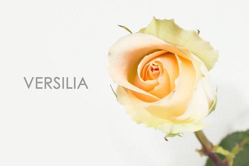 VERSILIA