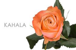 KAHALA-REAL