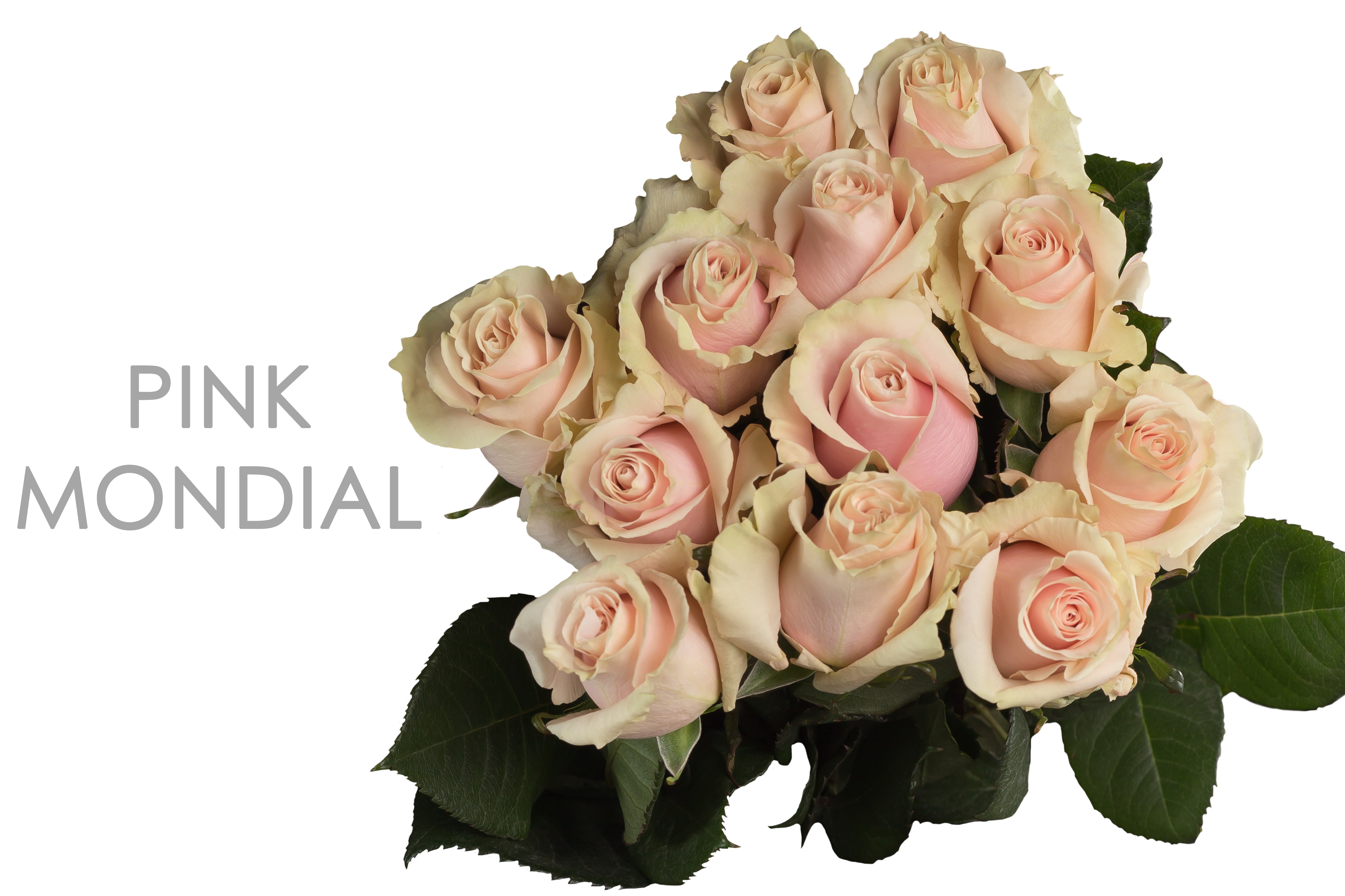 PINK-MONDIAL-CAPTION-BOUQUET