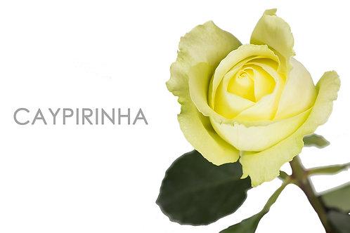 CAYPIRINHA