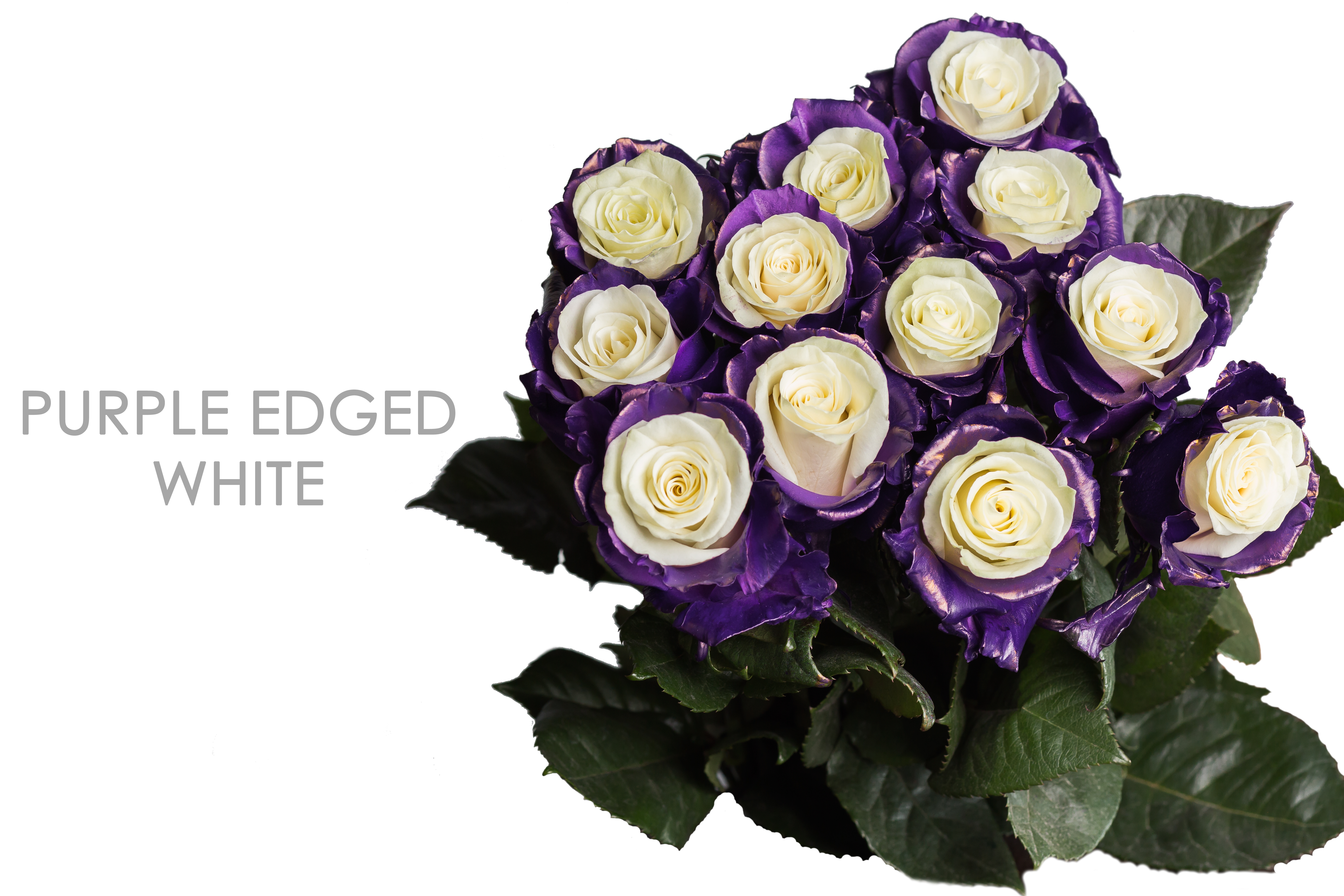 PURPLE-EDGED-WHITE-BOUQUET