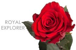 ROYAL-EXPLORER-CAPTION-UNIDAD
