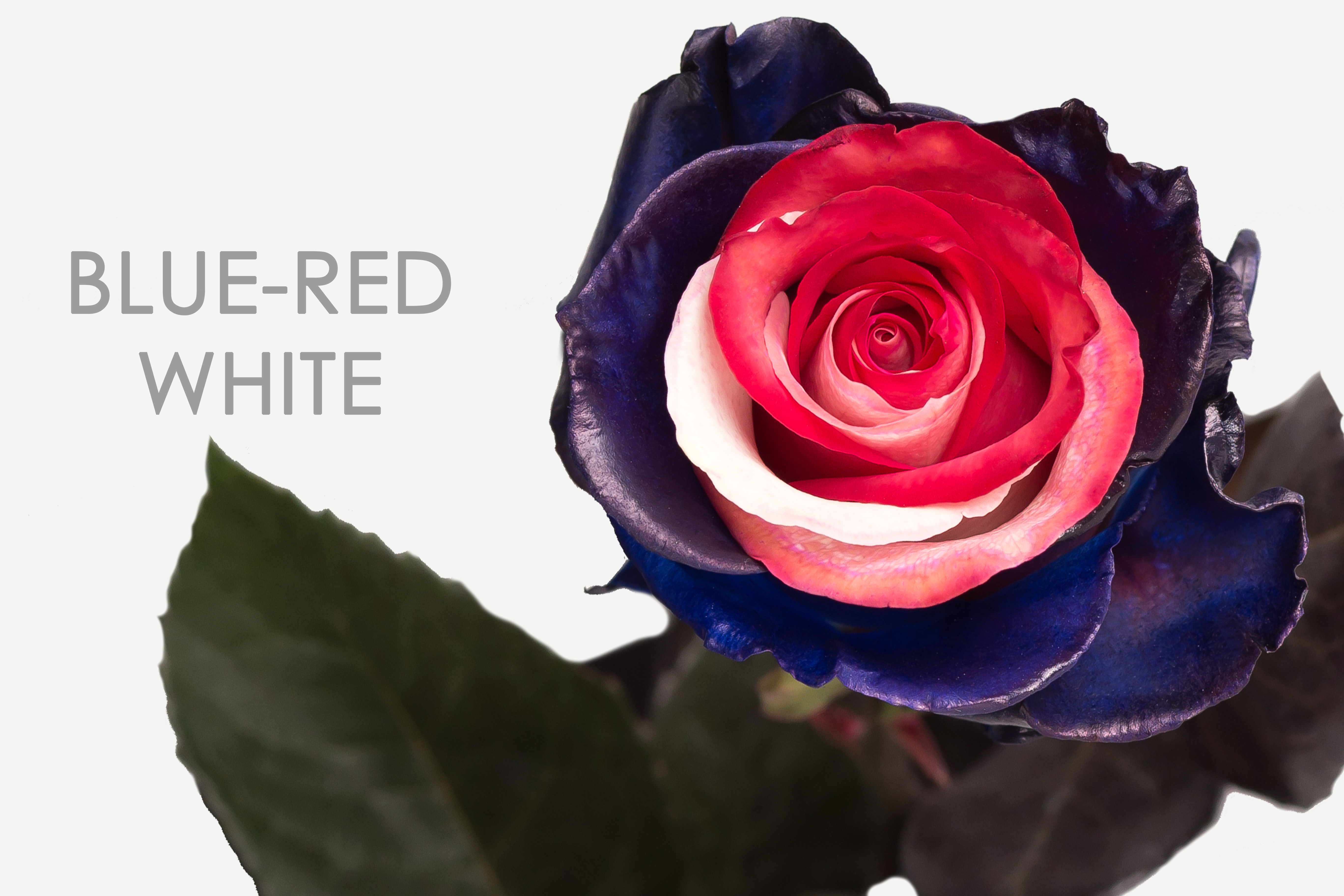BLUE-RED-WHITE-CAPTION-UNIDAD
