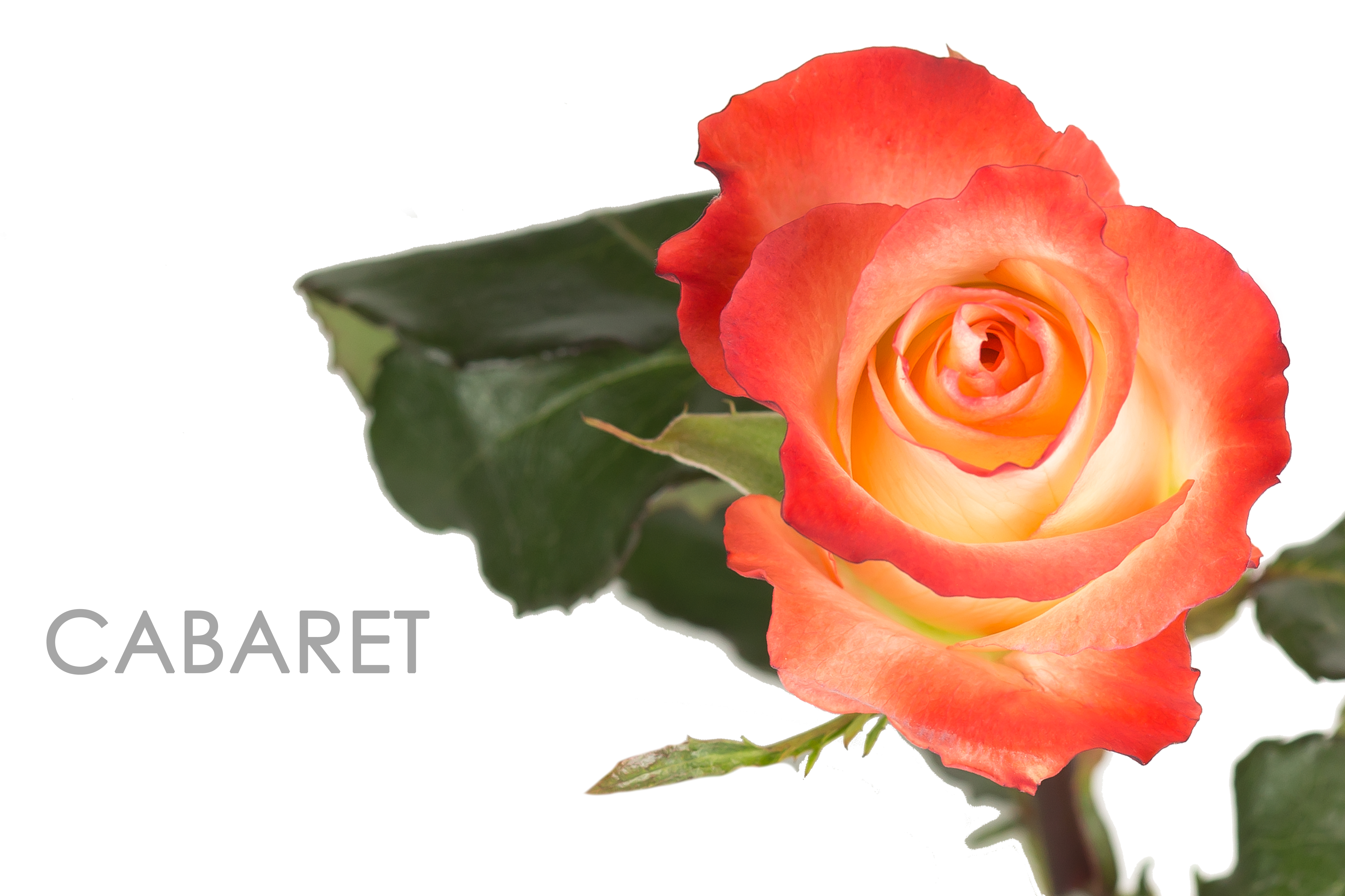 CABARET-CAPTION-UNIDAD