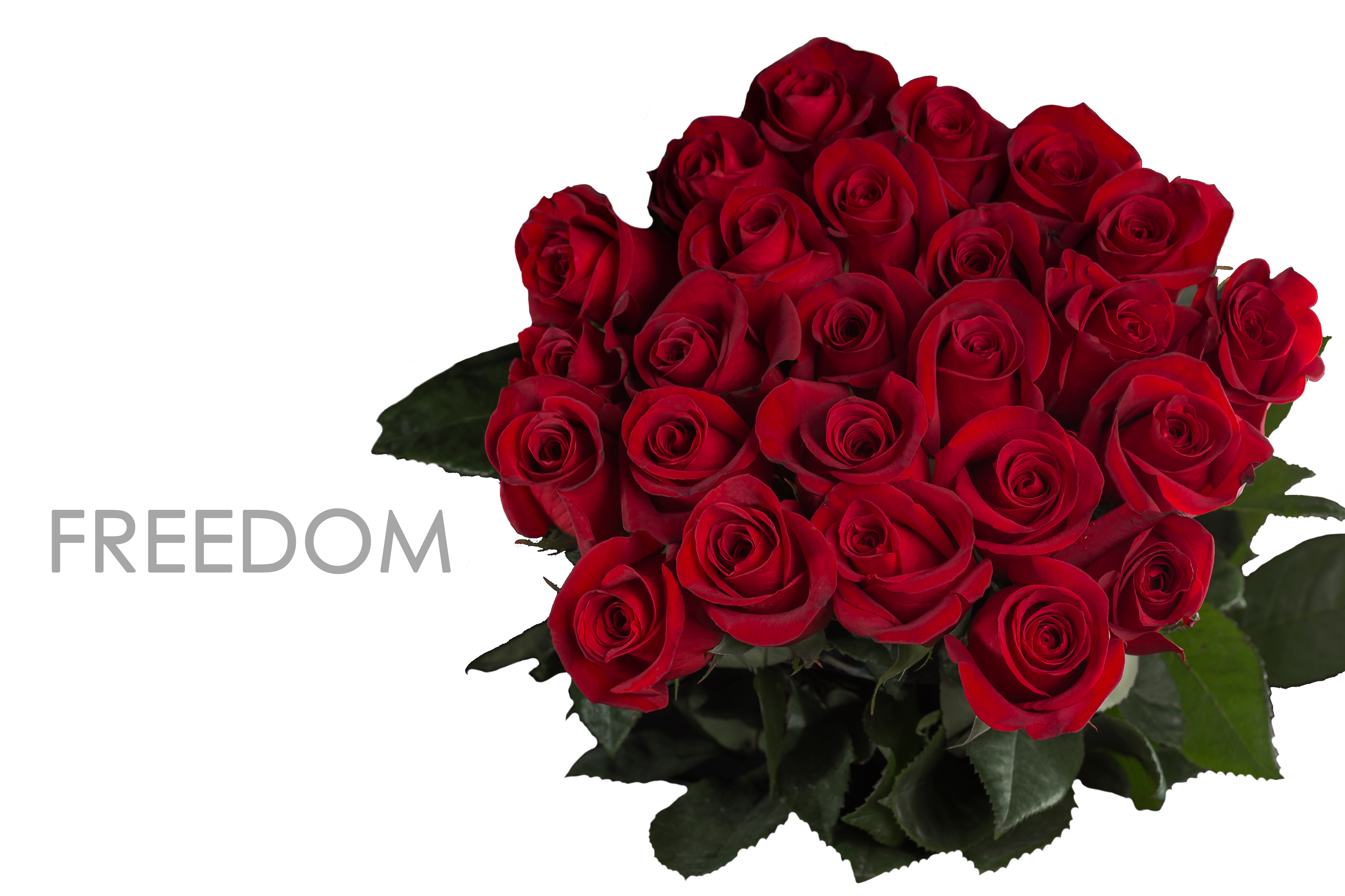 FREEDOM-CAPTION-BOUQUET