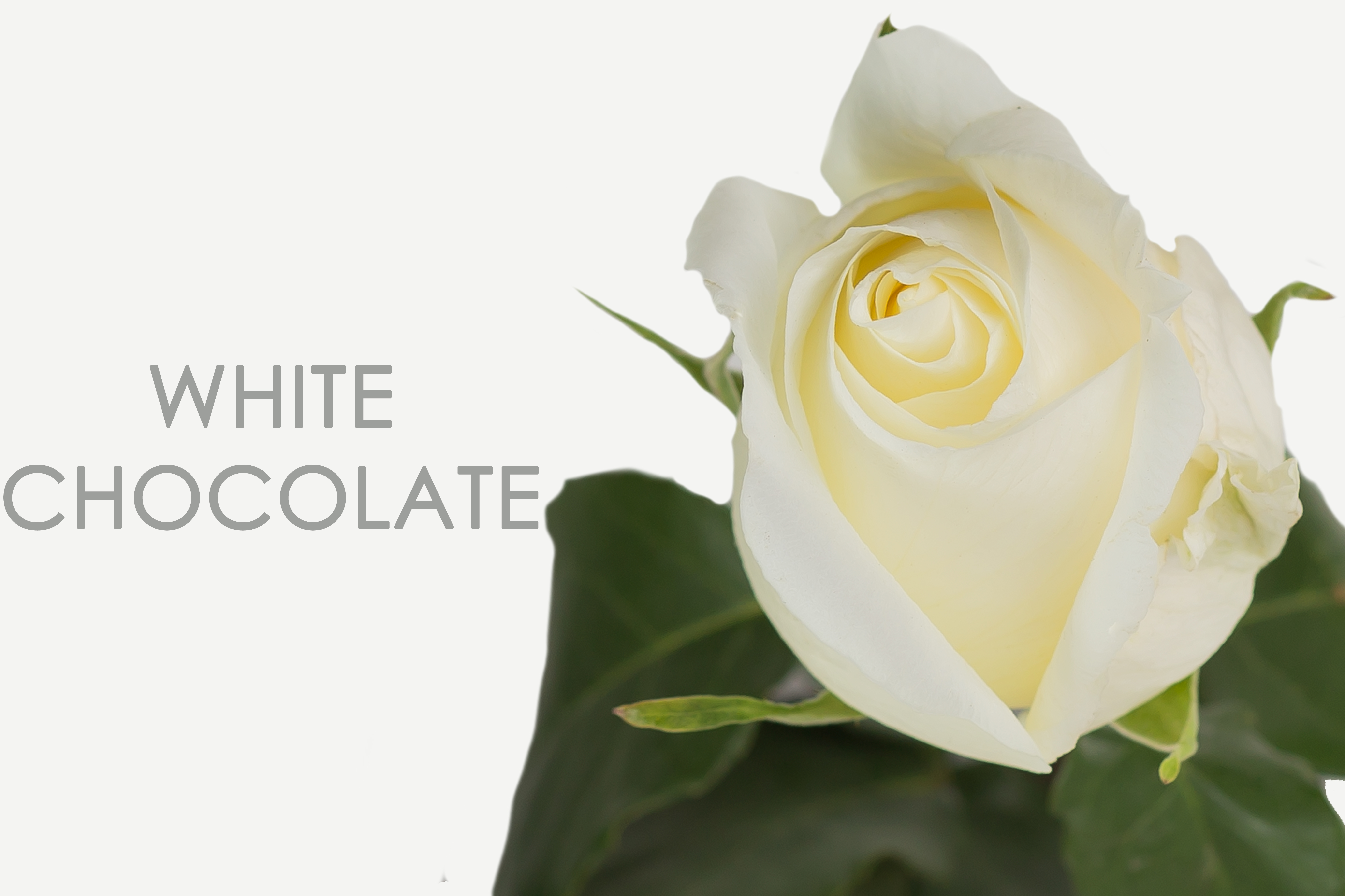 WHITE-CHOCOLATE-CAPTION-UNIDAD