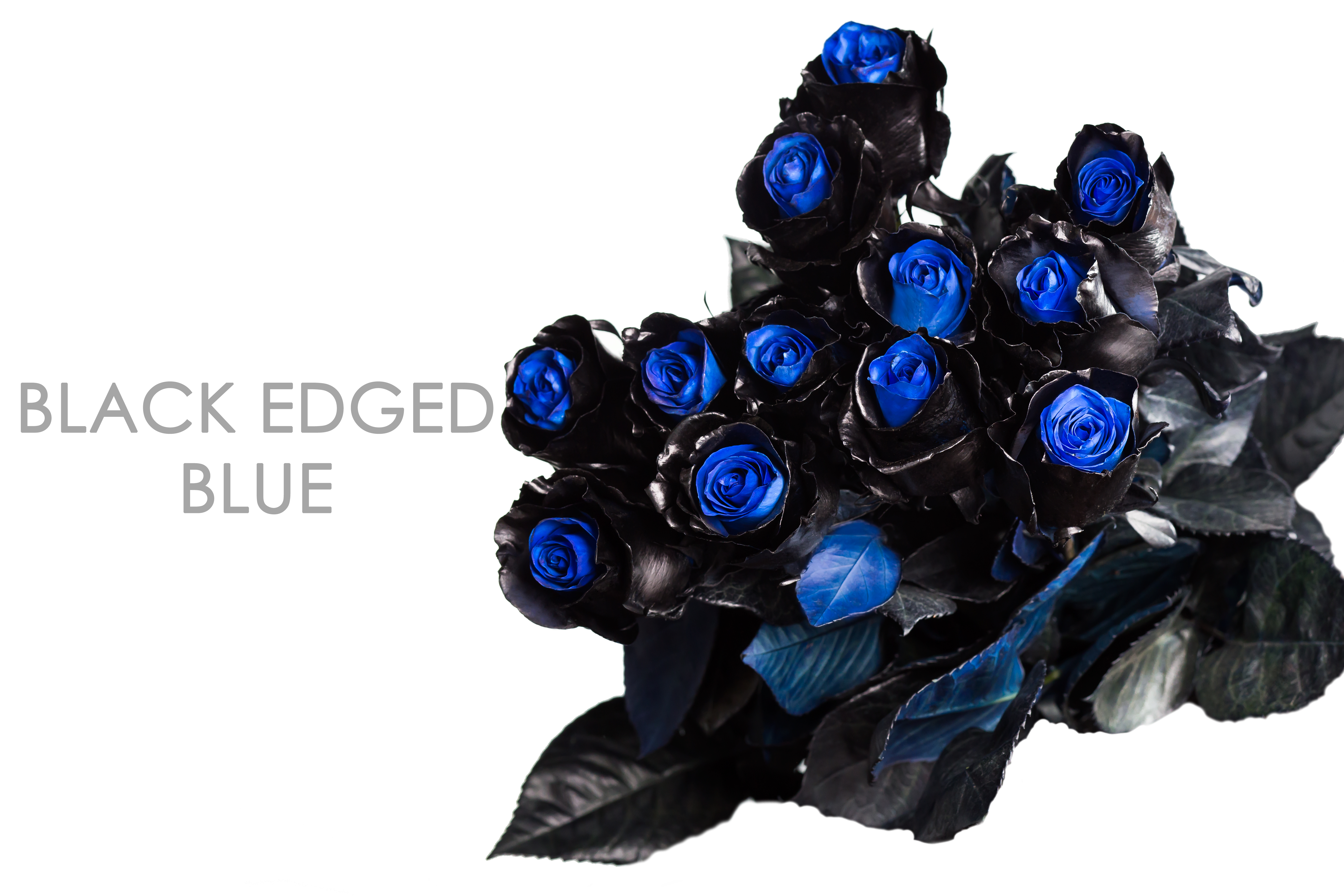 BLACK-EDGED-BLUE-BOUQUET