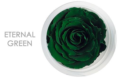 ETERNAL GREEN
