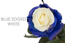 BLUE-EDGED-WHITE-CAPTION-UNIDAD