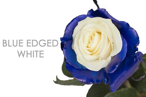 BLUE EDGED WHITE