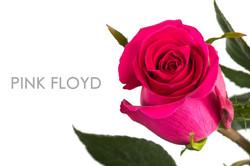 PINK-FLOYD-CAPTION-UNIDAD