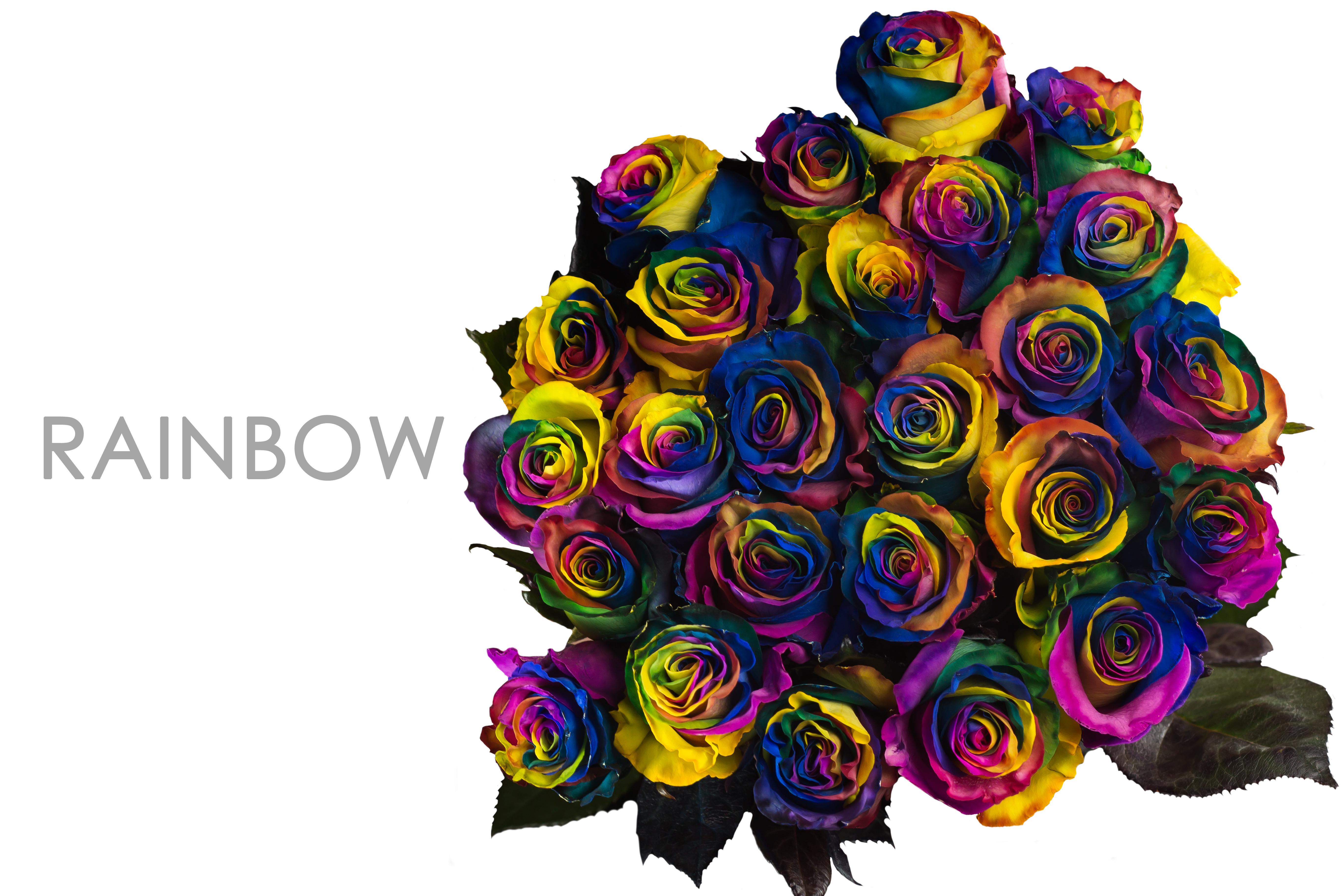 RAINBOW-CAPTION-BOUQUET