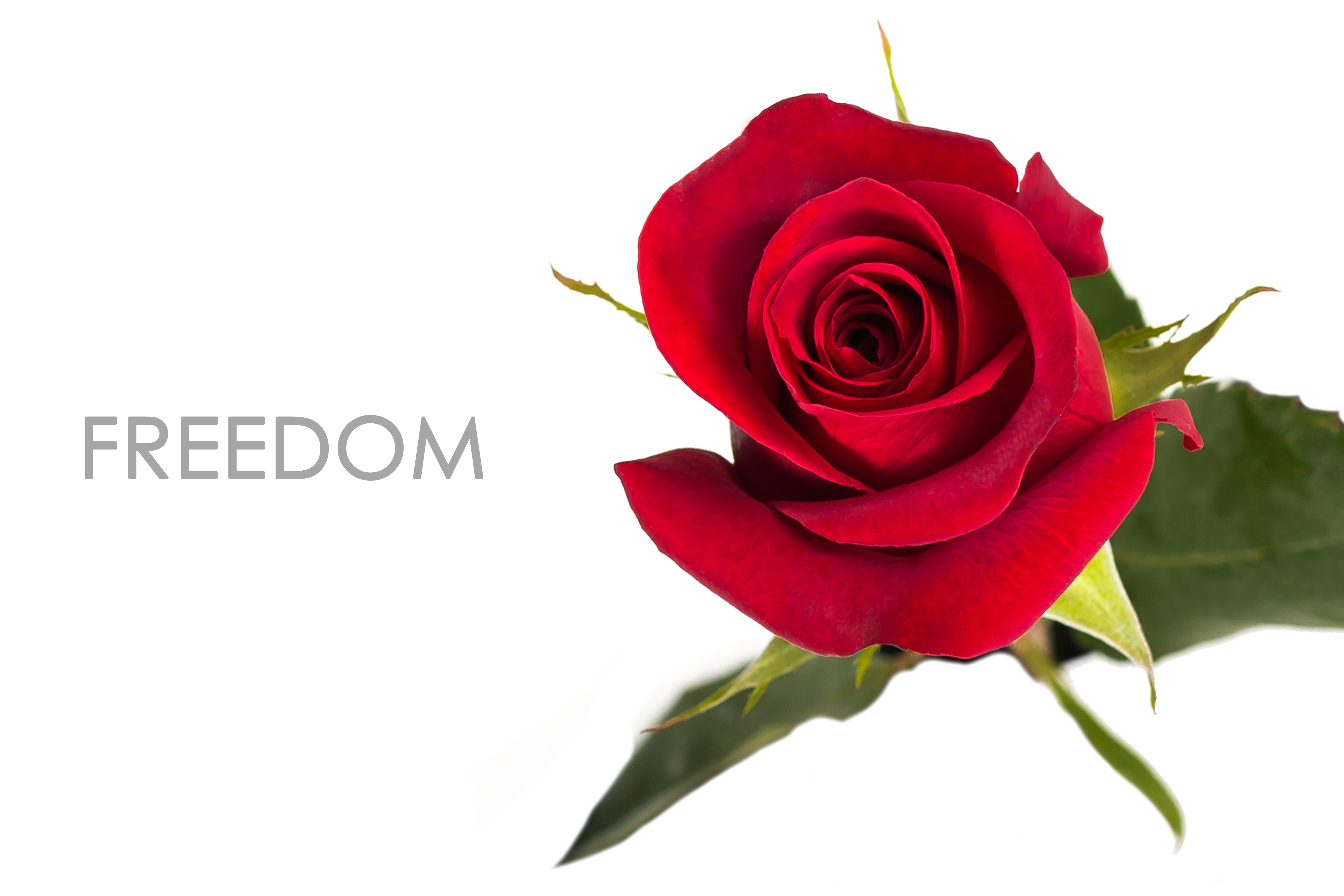 FREEDOM-UNIDAD-CAPTION
